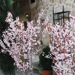 Primavera en La Carrasca
